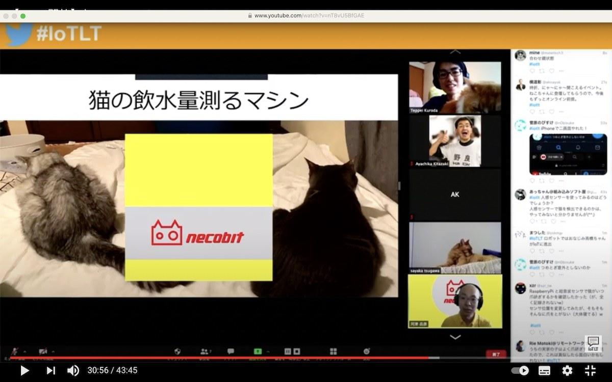 ねこIoTLT vol.2 配信動画より。各登壇者の猫たちも参加してます。